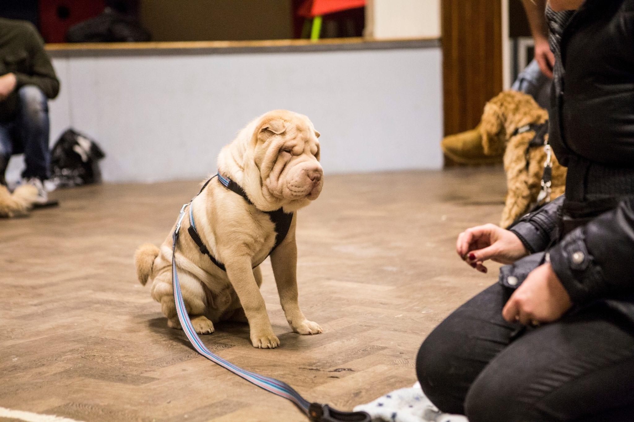 Dog Training Romford